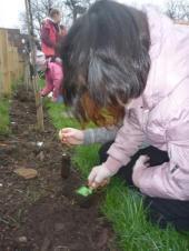 treeplant-smaller