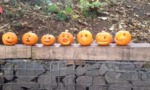 pumpkins_smaller